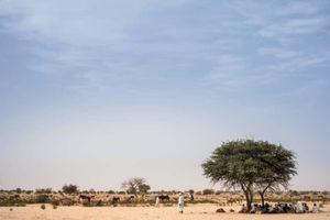 Cộng hòa Chad gia hạn tình trạng khẩn cấp thêm 4 tháng
