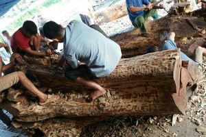 Một lần nữa, không có ai đặt mua hơn 6 tấn gỗ sưa đỏ trăm tuổi ở Chương Mỹ