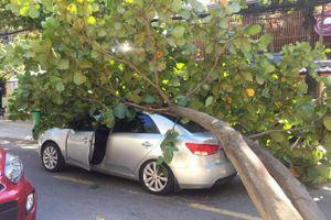 Cây xanh bật gốc đè móp ôtô, tài xế bung cửa thoát thân