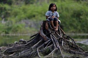 Khốn khổ cuộc sống bộ lạc Amazon vì cháy rừng dữ dội
