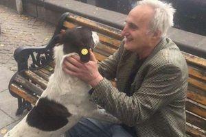 Soup sáng: Khoảnh khắc chú chó 'bật khóc' khi tái ngộ chủ sau 3 năm đi lạc