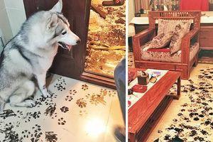 13 khoảnh khắc khó đỡ khi thú cưng 'quậy tung nhà'