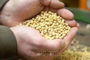 Trung Quốc nhập khẩu lượng đậu nành lớn từ Mỹ