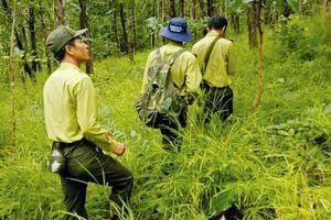 Đấu thầu tại Chi cục Kiểm lâm tỉnh Điện Biên: Nhà thầu đề nghị làm rõ lý do hủy thầu