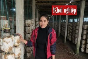 Tìm hướng đi mới cho sản phẩm nấm đã quen thuộc trên thị trường