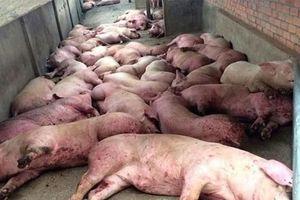 Thống nhất quan trắc, giám sát chất lượng môi trường tại một số ô chôn lấp lợn bị bệnh dịch tả lợn châu Phi