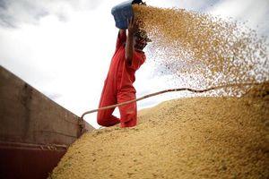 Trước giờ đàm phán thương mại, Trung Quốc cho phép mua nông sản của Mỹ