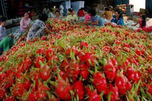 Bàn cách tăng giá trị xuất khẩu nông thủy sản sang Trung Quốc