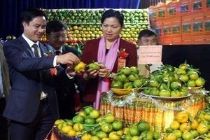 Ngày hội trái cây và nông sản an toàn Lào Cai năm 2019