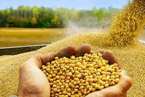 Trung Quốc ủng hộ mua nông sản của Mỹ để giảm căng thẳng thương mại