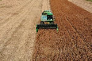 Tiếp tục 'xuống nước', Trung Quốc sẽ miễn thuế bổ sung với mặt hàng nông sản từ Mỹ