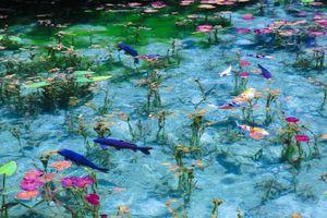 Khám phá ao nước đẹp nghẹt thở hệt như tranh
