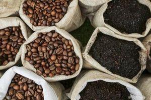 Giá cà phê hôm nay 15/9: Giảm mạnh về cuối tuần