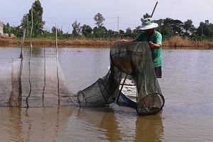 ĐBSCL: Nước lũ ở Tân Châu đã vượt báo động 1