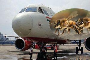 Hoãn chuyến bay trong nhiều giờ vì bị… ong tấn công