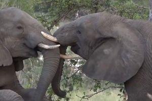 Nghẹn lòng khoảnh khắc đàn voi đưa tang đồng loại