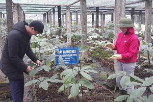 Giải pháp vùng cao Nghệ An: Xác định thế mạnh từng vùng, giữ 60% độ che phủ rừng