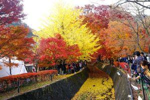 Du lịch Nhật Bản vào mùa thu, bạn đừng quên trải nghiệm những lễ hội hấp dẫn này