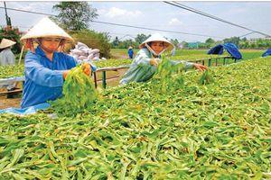 Động lực thúc đẩy nông thôn phát triển
