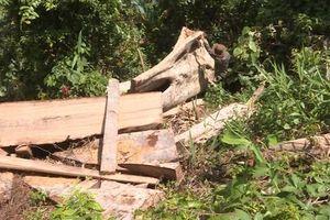 Phát hiện thêm 500 m3 gỗ trong vụ phá rừng quy mô lớn tại Đắk Lắk