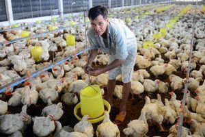Kỷ lục 10 năm qua, thịt gà rẻ hơn cả rau ngoài chợ