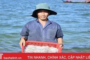 Hơn 1 tuần, ngư dân ở Hà Tĩnh trúng đậm gần 10 tấn mực, thu 2,8 tỷ đồng