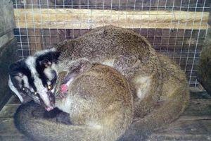 Trại nuôi động vật trái phép trong vùng đệm di sản Phong Nha