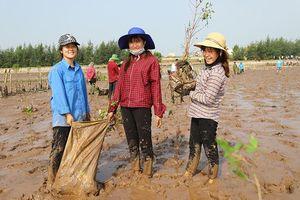 Thanh niên chung tay trồng hơn 8 nghìn cây phục hồi rừng ngập mặn giữ biển