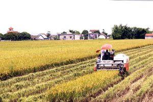 Nam Định: Đẩy nhanh tiến độ cấp giấy chứng nhận quyền sử dụng đất nông nghiệp sau dồn điền đổi thửa