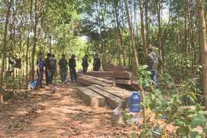 Đắk Lắk: Khám nghiệm hiện trường vụ phá rừng: Phát hiện thêm 500m3 gỗ bị cưa hạ