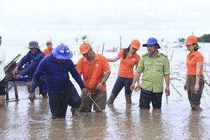 Doanh nghiệp bắt tay trồng rừng ngập mặn