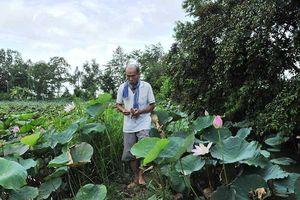 Anh hùng Nguyễn Văn Bảy lội đồng hái sen ở tuổi 83