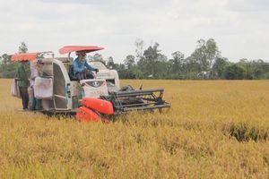 Bàn cách tăng giá trị hạt gạo xuất khẩu