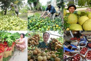 Xây dựng thương hiệu để trái cây Việt khẳng định vị thế