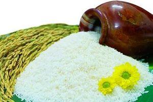 Công nghệ sẽ là 'chìa khóa' nâng cao năng suất, chất lượng lúa gạo Việt Nam