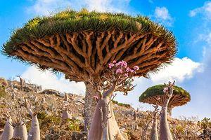 Chiêm ngưỡng những loài thực vật 'có một không hai' trên thế giới