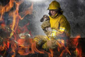 Chó cưng thông minh cứu nhà chủ khỏi chết cháy ngoạn mục