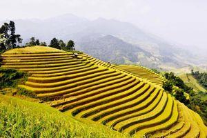 'Qua những miền di sản ruộng bậc thang' Hoàng Su Phì