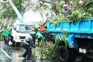 Nhiều bất cập trong quản lý cây xanh tại TP HCM