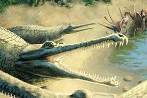 Phát hiện loài cá sấu biển có hàm răng đáng sợ