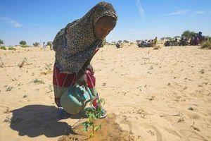 Thúc giục hành động về biến đổi khí hậu và phát triển bền vững