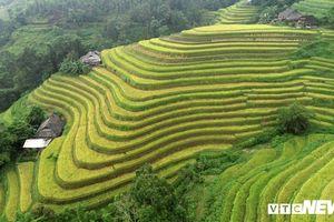 Ruộng bậc thang mùa lúa chín ở Hà Giang, cảnh đẹp mỗi năm chỉ có một lần