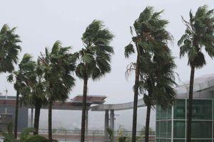 Mưa lớn, gió lốc do bão Tapah, Hàn Quốc phải hủy hàng trăm chuyến bay