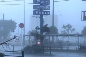 Ảnh hưởng của bão Tapa: Nhật Bản hủy hơn 360 chuyến bay