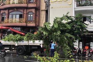 Bất thường việc đào gốc cây sưa trên vỉa hè trước cửa nhà hàng của đại gia xứ Huế
