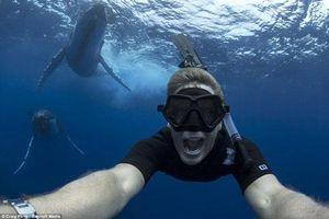 Mạo hiểm chụp ảnh cùng cá voi lưng gù khổng lồ