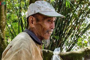 'Phi công huyền thoại' Nguyễn Văn Bảy đã bay theo những cánh chim trời