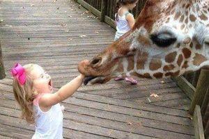 Trẻ em giật mình, khóc thét trước màn cà khịa của động vật hoang dã