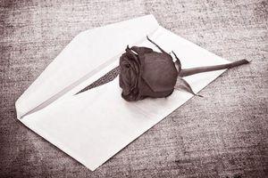 Hoa hồng suất ăn bán trú… không thơm đâu
