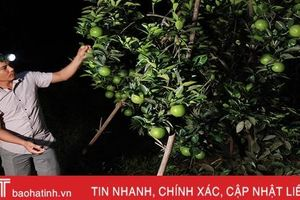 Người dân Hà Tĩnh soi đèn bắt loại côn trùng 'đốt đâu rụng đó' bảo vệ vườn cam